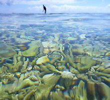Coral Garden at Lady Elliot Island by purelydecorative