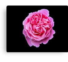 Large Pink Rose Canvas Print