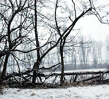 Look at the Snow Fall! by Colleen Friedman