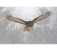 Great Gray Owl flying in snowstorm Photographic Print