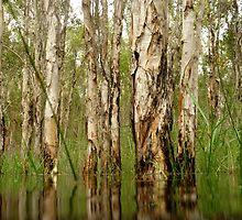 Tea Trees by Woodgate