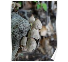 Bonnet Fungi Poster