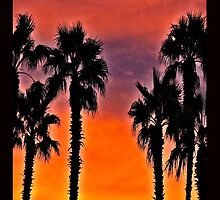 Palms At Sunset by tvlgoddess