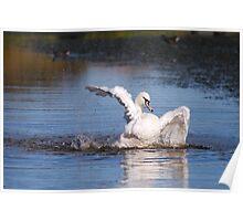 swan bath! Poster