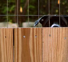 fenced in by aminner