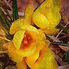 Yellows by Kay Kempton Raade