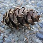 Pine Cone on Gravel by Angela Fisher