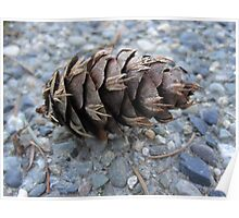 Pine Cone on Gravel Poster