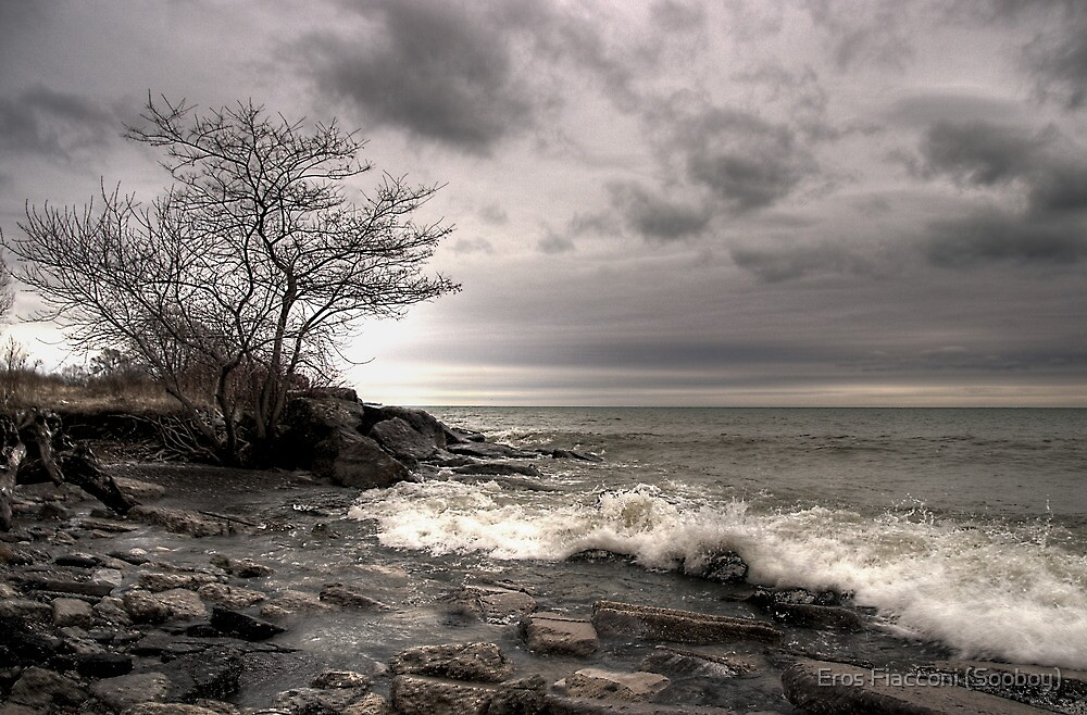 The tree - Humber Bay Park Toronto by Eros Fiacconi (Sooboy)