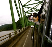 Dog Looking Out The Window in Oregon by Angela Fisher