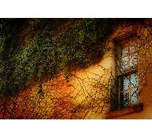 Window Grown Over Photographic Print