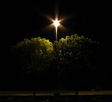 light over trees by aminner