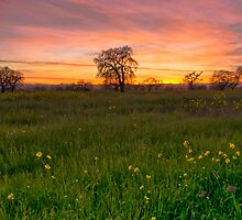 Sebastopol, Back Roads Sunset by MattGranz