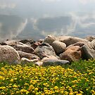 Trefoil and Rocks by Darcy Overland