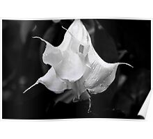 Angels Trumpet - Colombia Poster