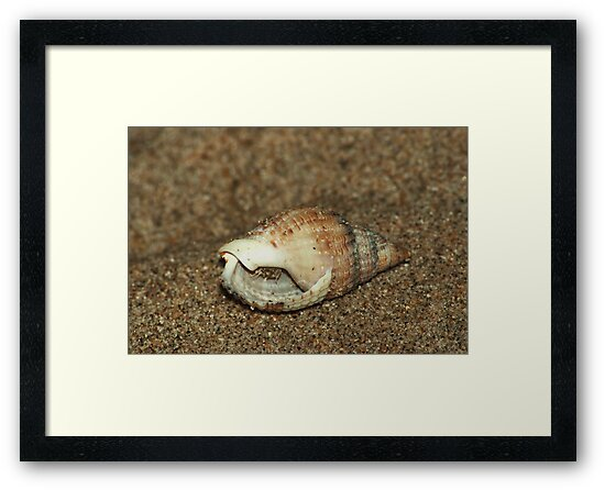 Shell home - inhabitant inside by steppeland
