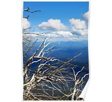 Silver Snowgum Vista Poster
