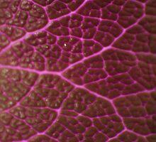 Pathways in Purple by Susan Brown