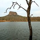 """Casualty of the lake!"" Entabeni, Waterberg, South Africa by Fineli"
