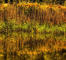 The Rushes - Tidbinbilla Sanctuary, Canberra -The HDR Experience by Philip Johnson