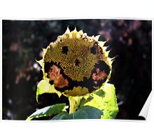 Meet Mr. Sunflower - Queens Park, Western Australia Poster