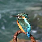 A COMMON KINGFISHER by Khaled EL Tangeer