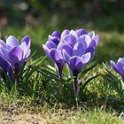 Purple Patch by Sally J Hunter