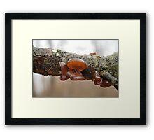 Judas Ear (auricularia auricula-judae Framed Print