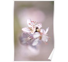 David peach Blossom  Poster
