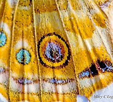 eyes of a Painted Lady, vanessa cardui by pogomcl