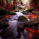 &quot;Little Forester River-2&quot; by Husky
