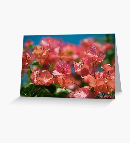 Bali Bougainvilleas Greeting Card