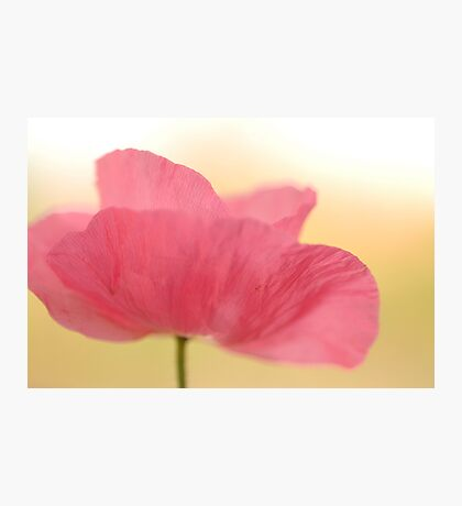 La Poppy Photographic Print
