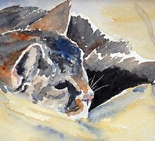 Cat on a beanbag by Sharon Williamson