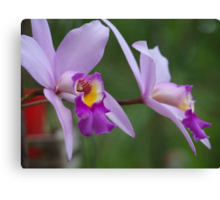Orchid #1 Canvas Print