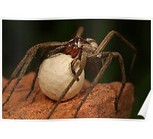 nusery web spider and her egg sack Poster