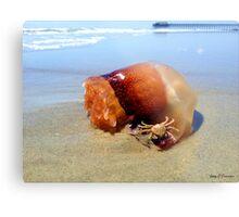 Jellyfish Crab Hitchhiker  Metal Print
