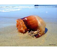 Jellyfish Crab Hitchhiker  Photographic Print