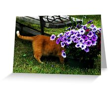 Curiosity And The Cat  Greeting Card