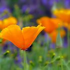 Vibrance of Summer  by Nicole DeFord