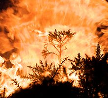 Gorse Fire by stephen foote