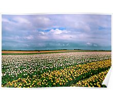 Colorfull spring Poster