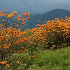Flame Azaleas on the Appalachian Trail by Jane Best