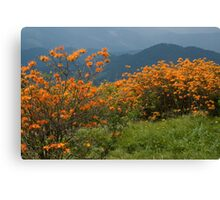 Flame Azaleas on the Appalachian Trail Canvas Print