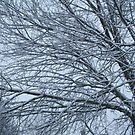 Branches of Snow by Lorelle Gromus