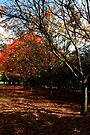 Autumn In Picton #2 by Evita