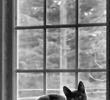How much is that kitty in the window? by Carrie Bonham