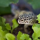 Lettuce Lizard by Sue  Cullumber