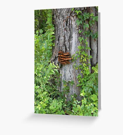 Bracket Fungus or Shelf Fungus Greeting Card