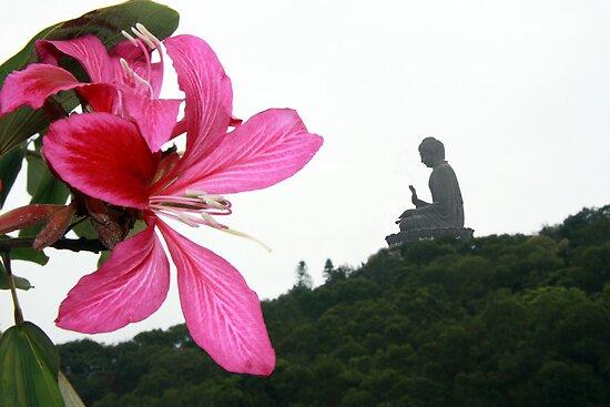 Buda - Nong Peng, Hong Kong 2010 by Odalisque